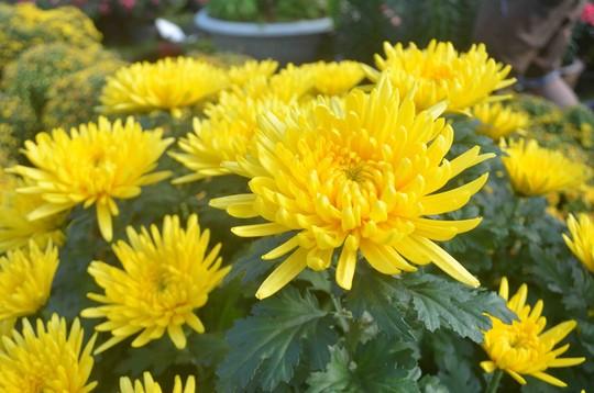 Những loại hoa nên cắm trên ban thờ ngày Tết